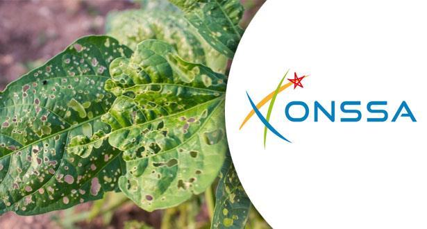 """""""ONSSA"""" يدعو إلى اليقظة ويعزز المراقبة لتجنب دخول بكتيريا تصيب النباتات"""