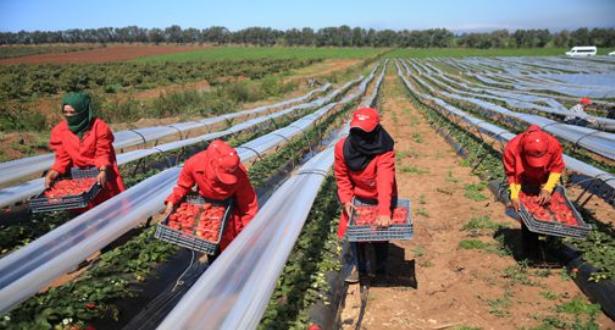 إعادة العاملات المغربيات اللواتي يشتغلن بهويلفا ابتداء من يوم السبت