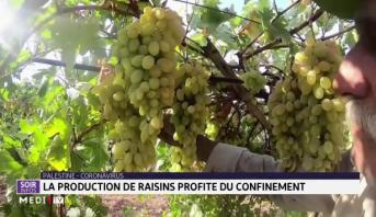 Palestine: la production de raisins profite du confinement
