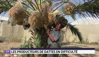 Palestine: les producteurs de dattes en difficulté