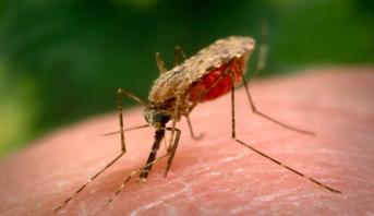 Rwanda: les cas de paludisme chutent de 71% entre 2016 et 2021
