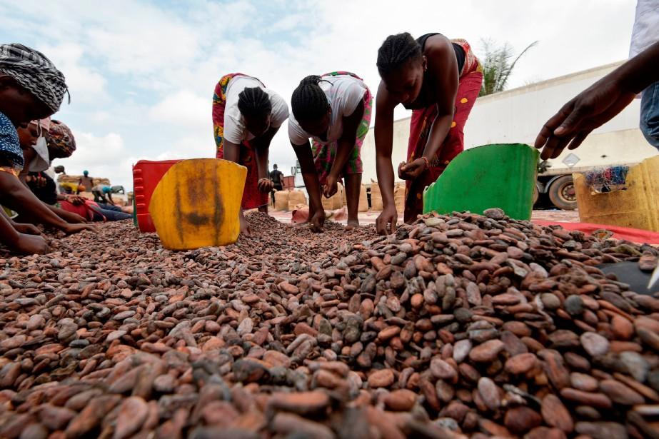 Cacao : Le Ghana et la Côte d'Ivoire lèvent la suspension des ventes sur 2020-2021