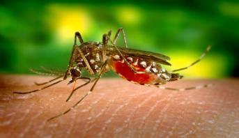 """الصين تعلن عن اكتشاف أول حالة إصابة بفيروس """"زيكا"""""""