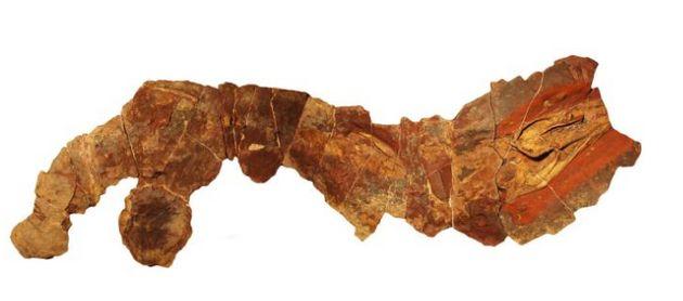 La découverte au Maroc d'un fossile de 360 millions d'années permet de percer le mystère de l'ancêtre du requin (Revue US)