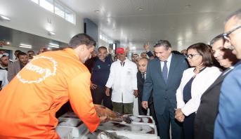 Ouverture du marché de gros au poisson d'Inezgane