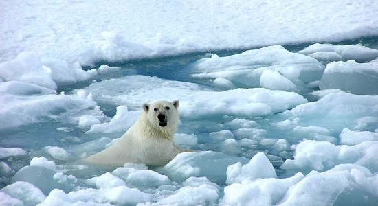 علماء روس يؤكدون وقوع انخفاض قياسي في الغطاء الجليدي في القطب الشمالي