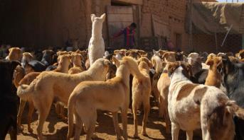 """برليناله 2020 ..تتويج الفيلم المغربي """"كلاب"""" بجائزة """"الدب الكريستالي"""" لأفضل فيلم قصير"""