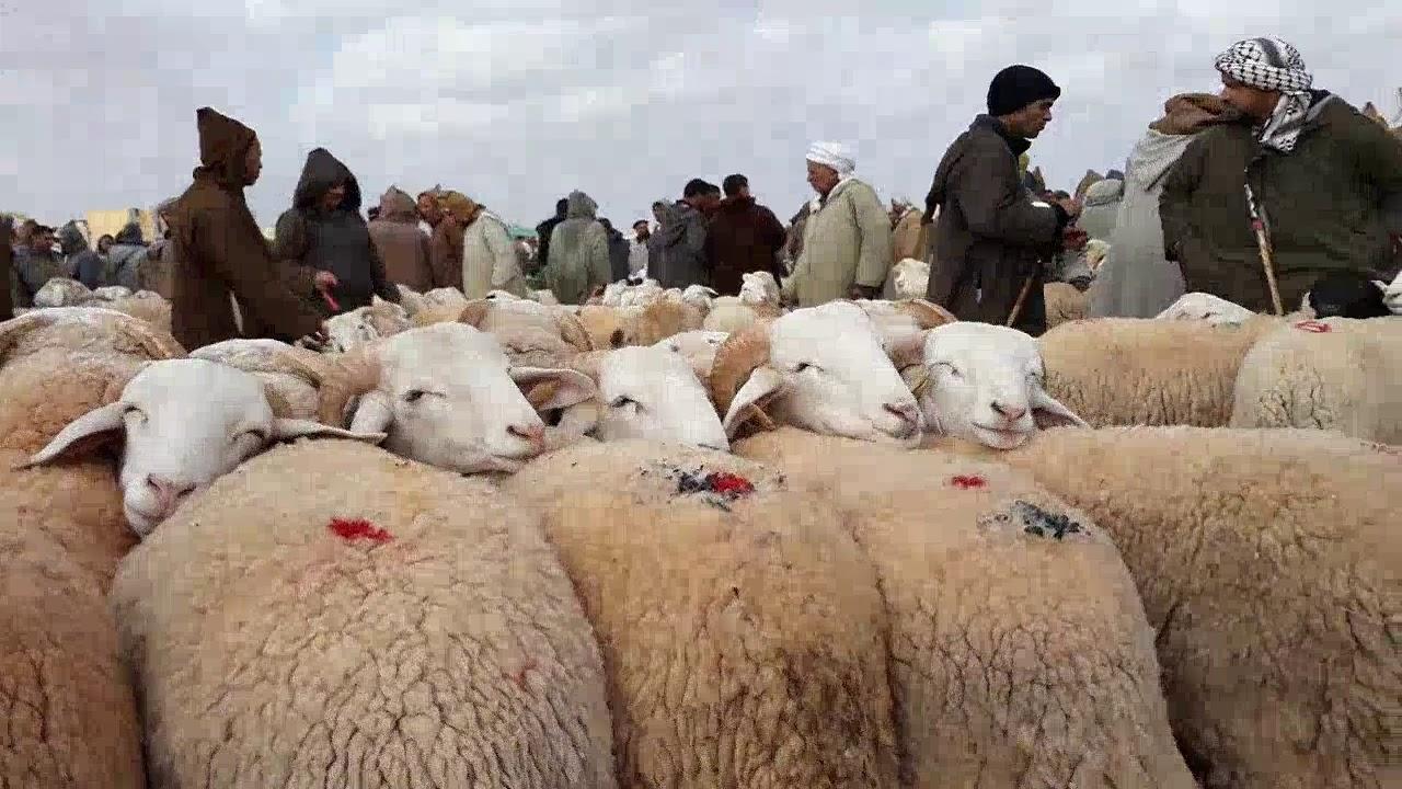 عيد الأضحى بالجزائر: قلق من الجائحة ومربو المواشي ينتقدون إجراءات كبدتهم خسائر كبيرة