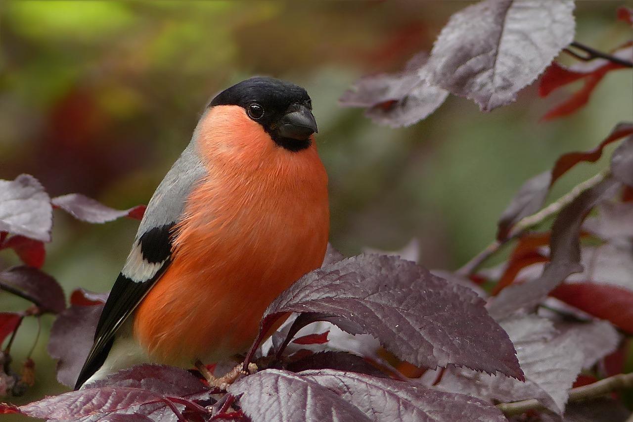 التلوث الضوضائي يحدّ من ذكاء العصافير