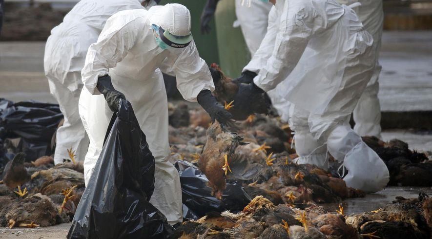الصين تسجل تفشيا لإنفلونزا الطيور شرق البلاد