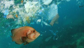 Indonésie: plus de plastiques que de poissons dans la mer en 2030
