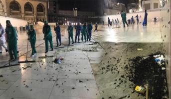 توضيح أمانة مكة حول أسراب حشرات اجتاحت ساحات الحرم المكي