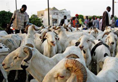 Sénégal/Tabaski: les besoins en moutons sont de l'ordre de 803 mille têtes