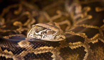 Crocoparc Agadir : naissance de 26 bébés anacondas