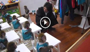فيديو وصور .. افتتاح مدرسة للقردة في الصين
