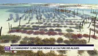 Tanzanie: le réchauffement climatique menace la culture des algues