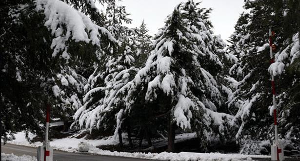 Taza : Un plan d'action pour atténuer les effets du froid