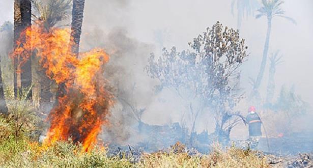 جهود متواصلة للسيطرة على حريق بغابة حوز الملاليين بعمالة المضيق-الفنيدق