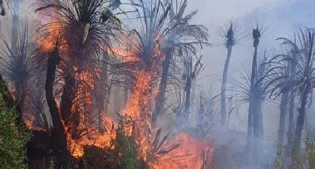 إخماد حريق في واحة آيت منصور قرب مدينة تافراوت