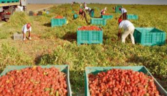 Départ en avril des ouvrières agricoles bénéficiaires de permis de travail en Espagne
