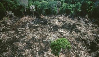 مستوى قياسي لقطع الأشجار في الأمازون في النصف الأول من 2020
