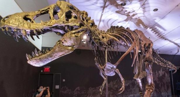 مزاد على هيكل عظمي لتيرانوصور في نيويوروك وتوقعات بسعر قياسي