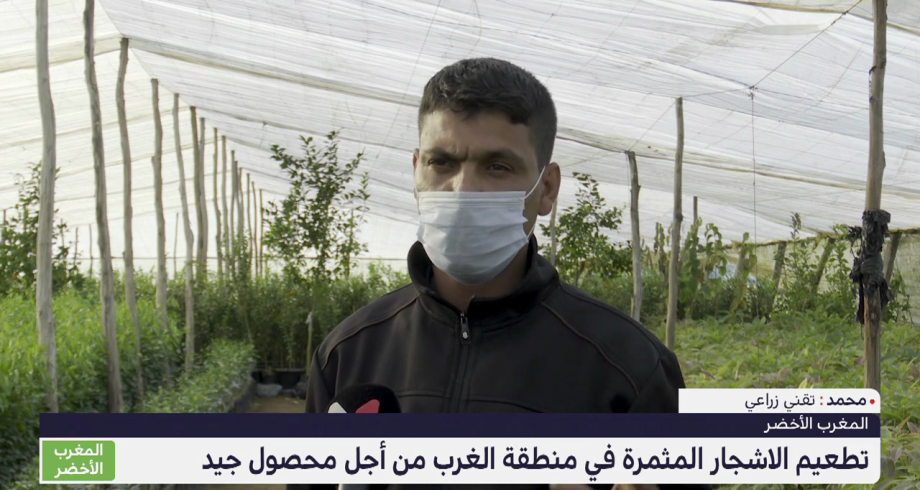 المغرب الأخضر .. تطعيم الأشجار المثمرة في منطقة الغرب من أجل محصول جيد
