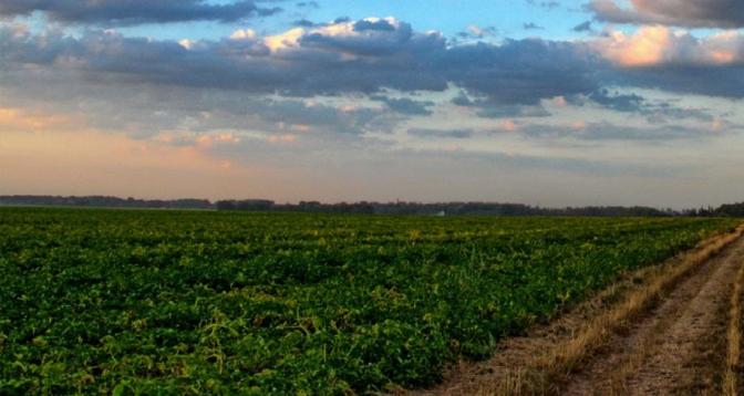 Plus de 25 millions dollars pour la relance de l'agriculture en Angola