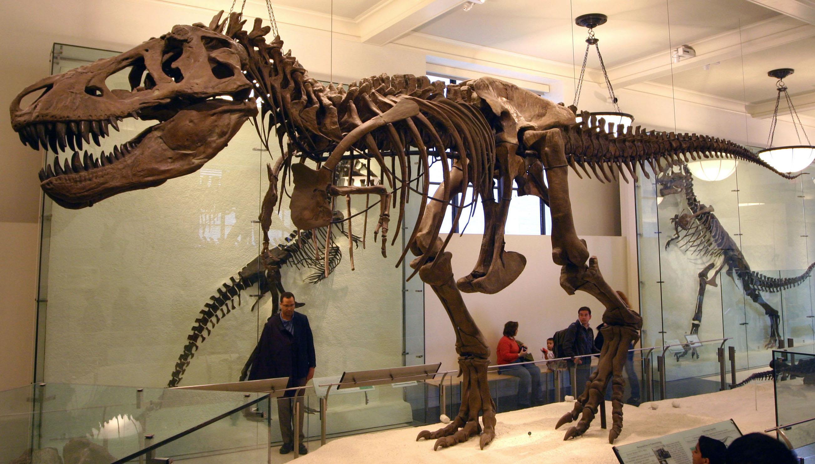 دراسة: حوالي 2.5 مليار تيرانوصور جابوا الكرة الأرضية على مدار مليوني عام