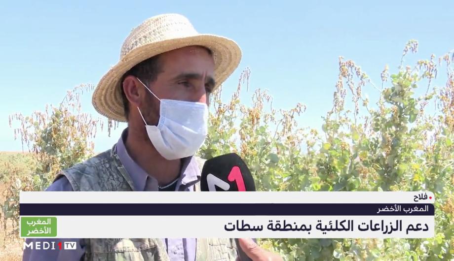 المغرب الأخضر .. دعم الزراعات الكلئية بمنطقة سطات