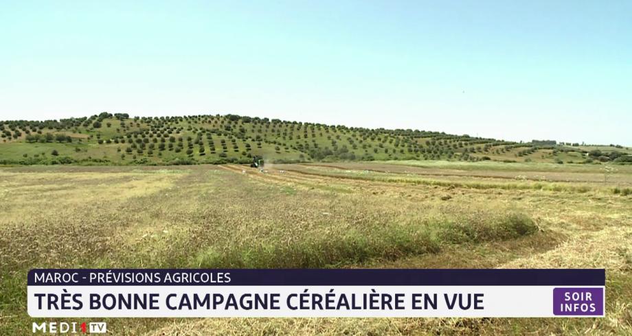 Maroc: très bonne campagne céréalière en vue