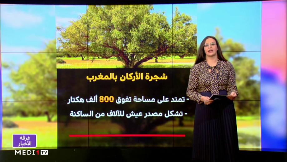 شاشة تفاعلية .. مميزات شجرة الأركان بالمغرب