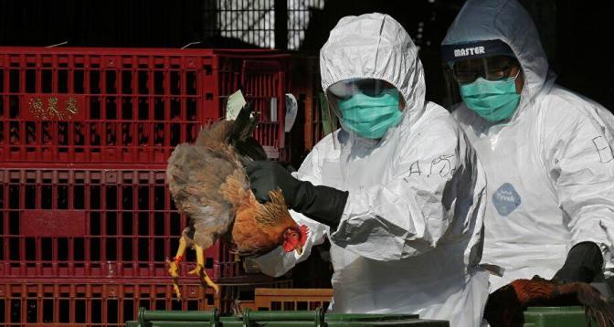 الصين تسجل أول إصابة بشرية بإنفلونزا الطيور