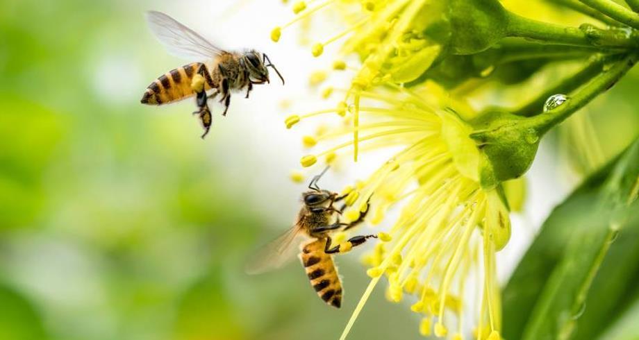 ماذا نعرف عن عالم النحل ؟