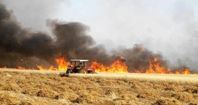 النيران تأتي على 120 هكتارا من محاصيل الحبوب ببرشيد