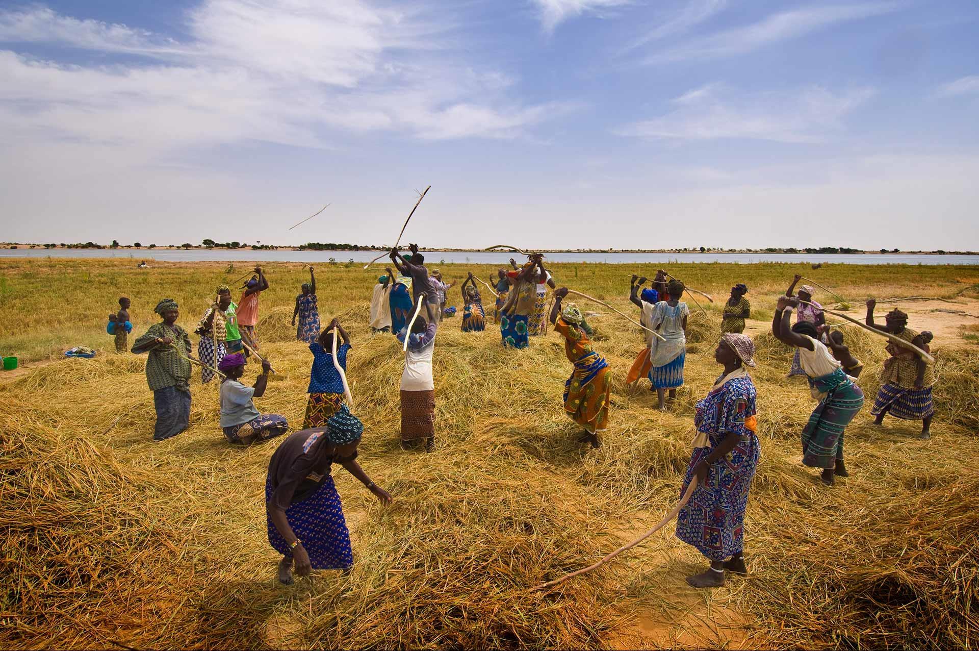 الزراعة والرعي بإفريقيا.. مصدر قوة وصراع