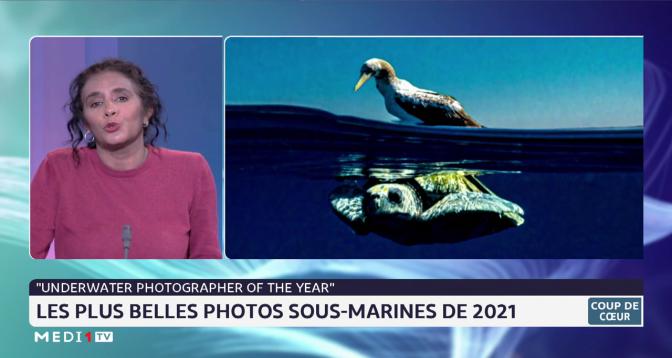Coup de cœur: les plus belles photos sous-marines de 2021