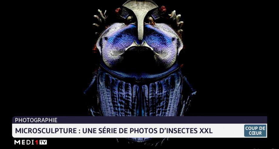 Coup de cœur: microsculpture, une série de photos d'insectes XXL