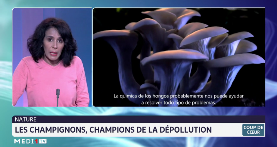 Coup de cœur: les champignons, champions de la dépollution