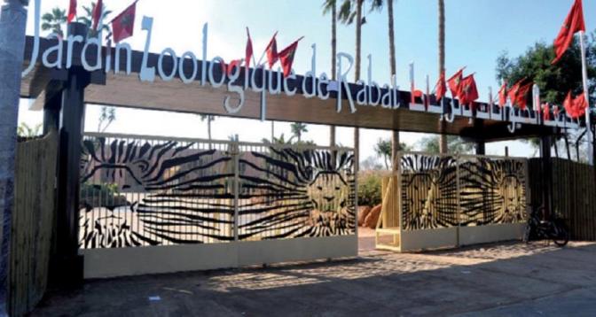 Plus de 80 naissances et 8 nouvelles espèces font leur entrée au Jardin zoologique de Rabat