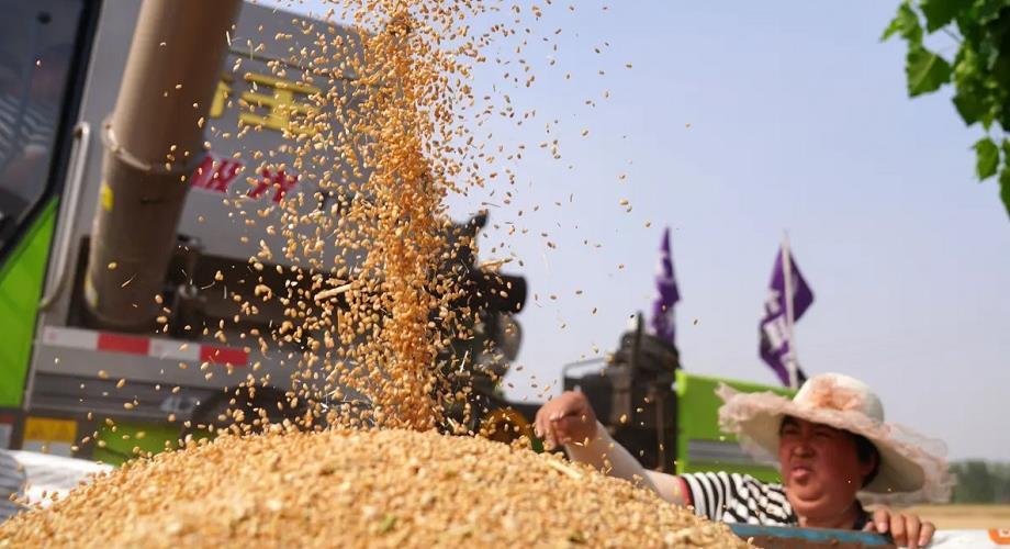 الأمم المتحدة تحذر من ارتفاع تكلفة الغذاء عالميا