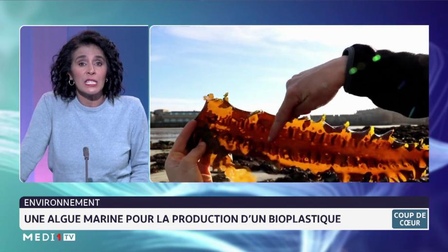 Environnement: une algue marine pour la production d'un bioplastique