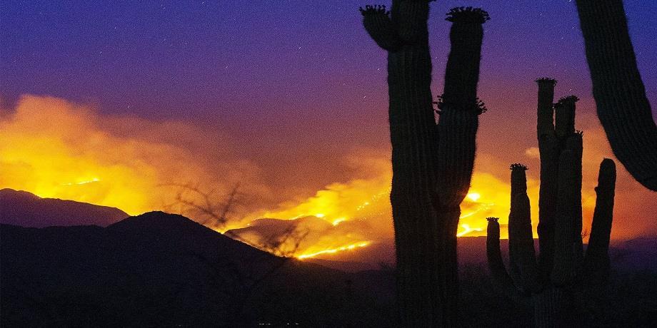 USA: Plus de 57.000 hectares ravagés par des feux de forêt en Arizona