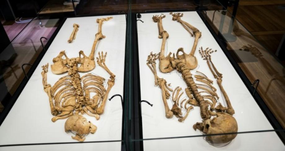 هيكلان عظميان لمحاربين من الفايكينغ تربطهما قرابة يجتمعان في متحف الدنمارك