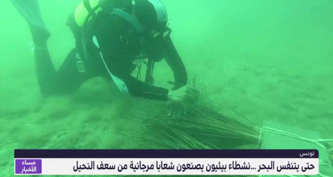 حتى يتنفس البحر .. نشطاء بيئيون يصنعون شعابا مرجانية من سعف النخيل