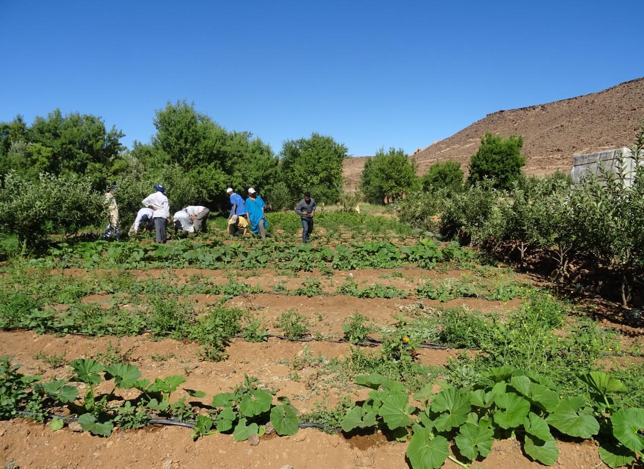 """""""L'agroécologie et l'agriculture urbaine au Maroc"""", le point avec Rachida Mehdioui"""
