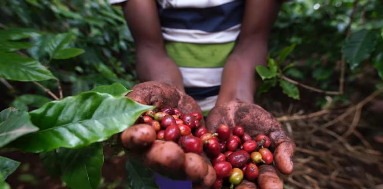 La biodiversité du sol en Côte d'Ivoire, les précisions de Aymard Kouakou