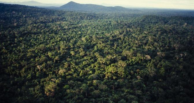 دراسة: غابة الأمازون تتحول إلى مصدر لثاني أكسيد الكربون