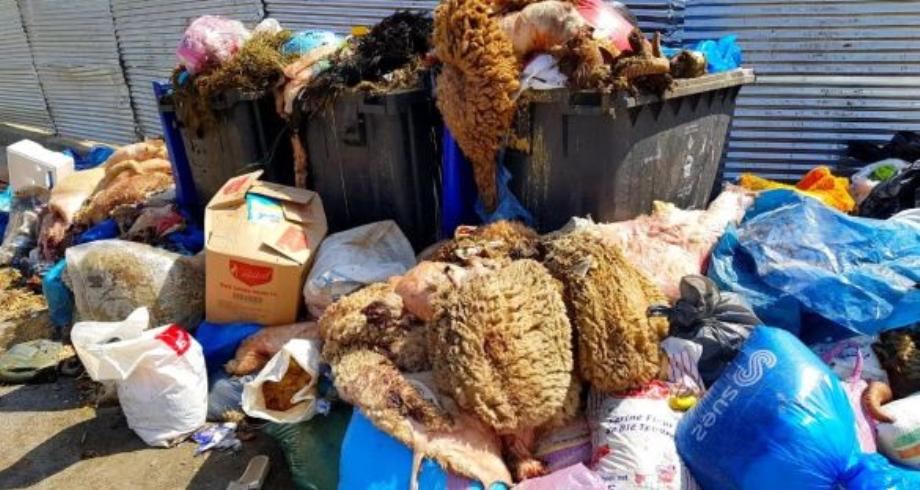 الدار البيضاء..حملة من أجل عيد أضحى نظيف