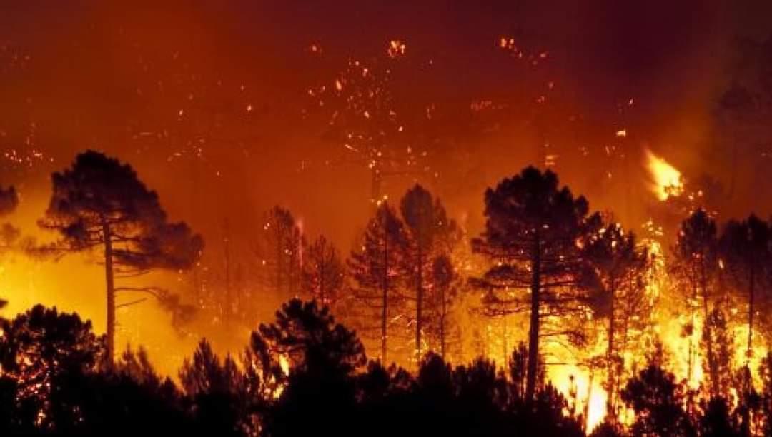 Incendies en Sardaigne: l'UE mobilise une aide d'urgence en faveur de l'Italie